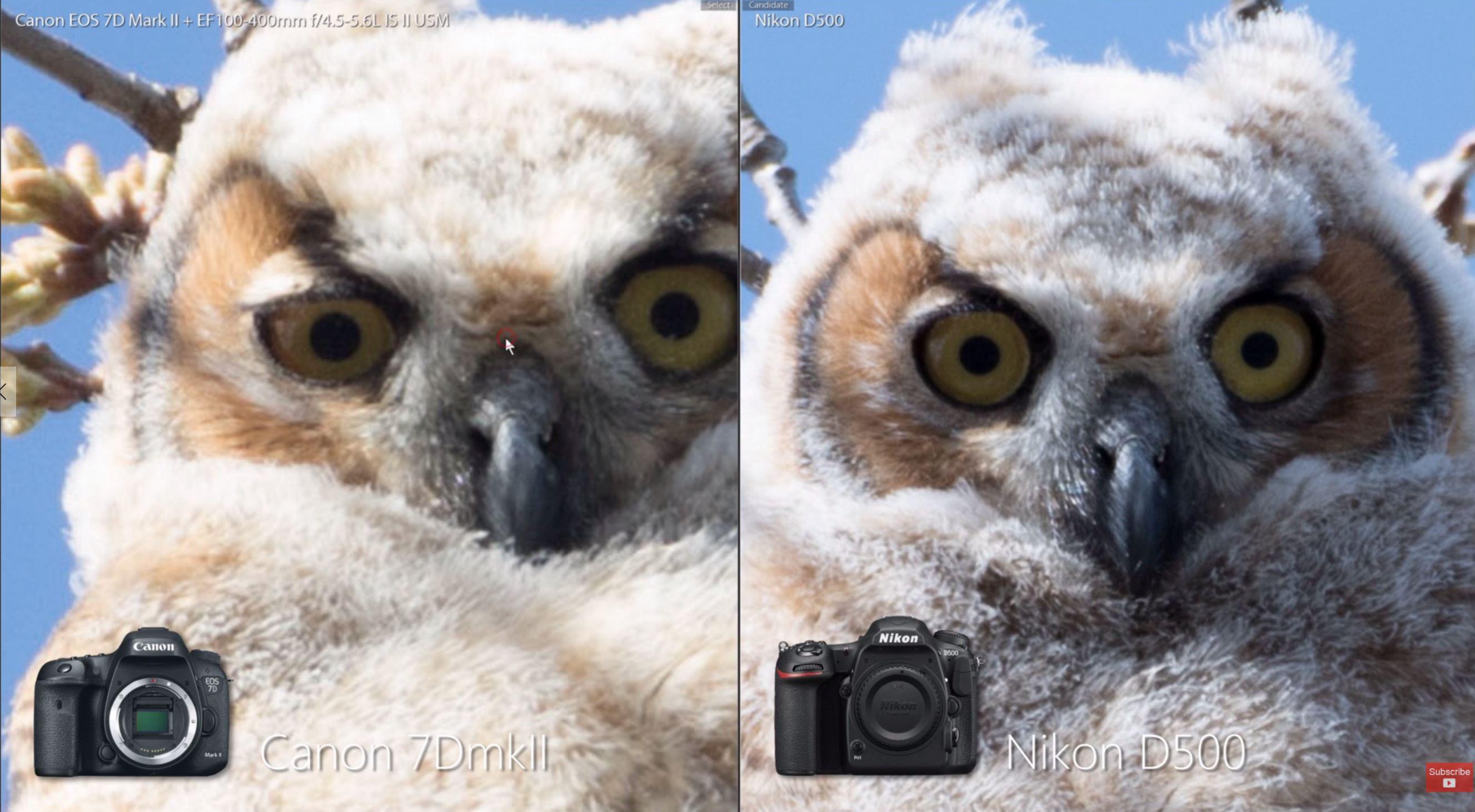 Fullsize Of Nikon D500 Vs D750