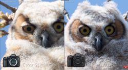 Small Of Nikon D500 Vs D750