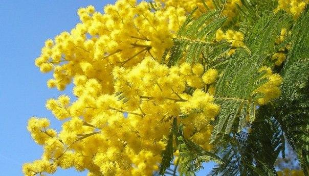 Festa della Donna fra festeggiamneti e iniziative culturali