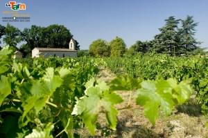 Vignobles du Gaillac @Tourisme-Tarn