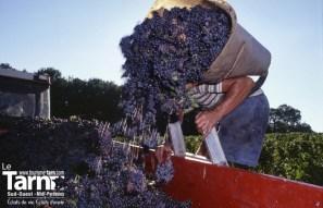 Vignobles du Gaillac Camping Tarn