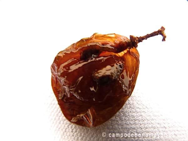 semillas-de-uva-en-pasas-moscatel