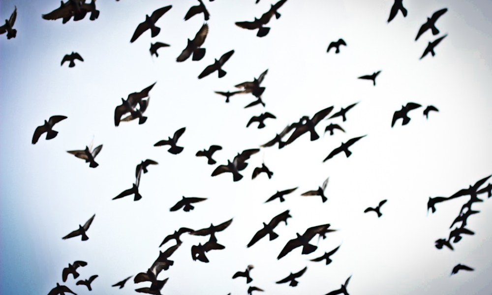 Consider the pigeon: Notes on taking flight.