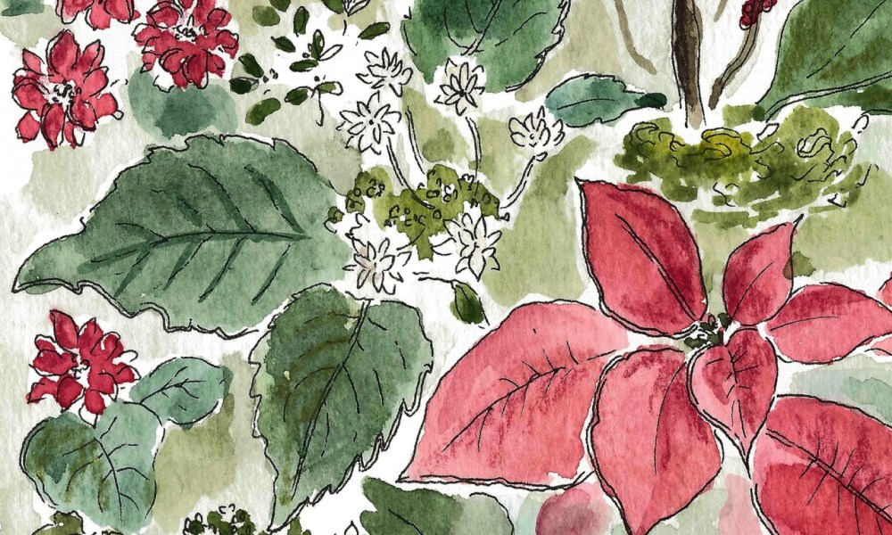 Sketching Christmas spirit: Poinsettias and post office revelations.
