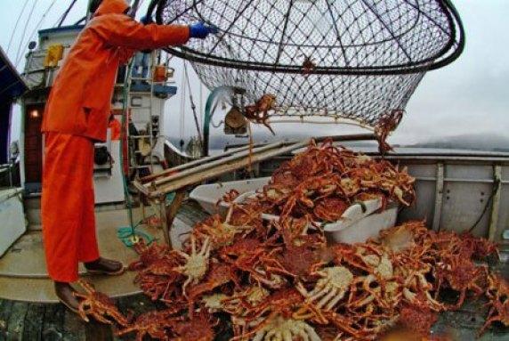 Resultado de imagen para pesca de cangrejos