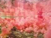 Macarenia Clavigera, la planta acuática de Caño Cristales