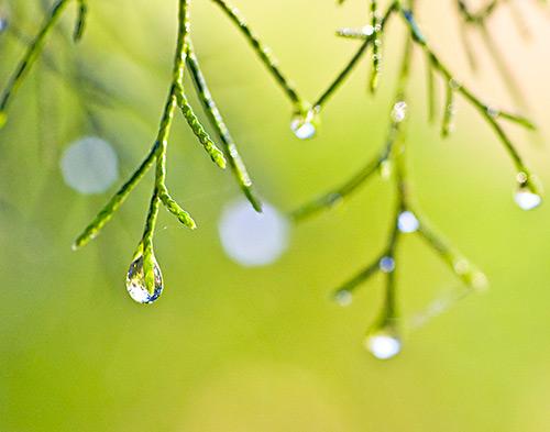 dewdrops21.jpg