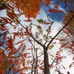 autumn-5