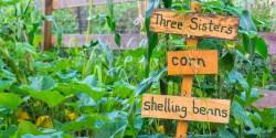 Small Of Berns Garden Center