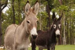 donkeys_march2016