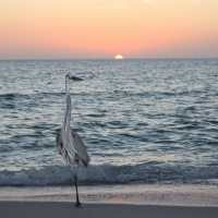 Saturday, 4/19/14, Captiva Fishing Report: Happy Easter ~ Sanibel, Captiva & North Captiva, #Captiva