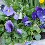 Bryant Park Flowers