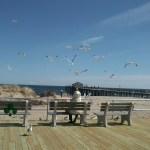 Lady feeding sea gulls in Ocean Gorve