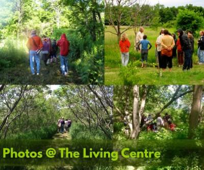 Ethical Foraging Herb Walks | Carolinian Canada