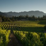 CAB Mary_Steinbacher_Photography_McBride_Vineyard_101210_67_of_462