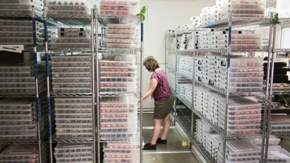 The faces are meticulously cataloged and stored before and after they are used in scenes.