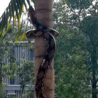 Schlange klettert auf einen Baum