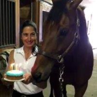 Ein Pferd bekommt eine Geburtstagstorte