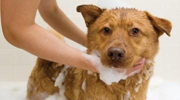 3705-stepping-up-pet-wash-sales.jpg