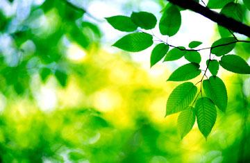 Sunny-leaves.jpg