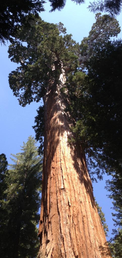 Gen Grant Tree