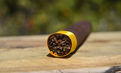 Crowned-Heads-Yellow-Rose-Foot