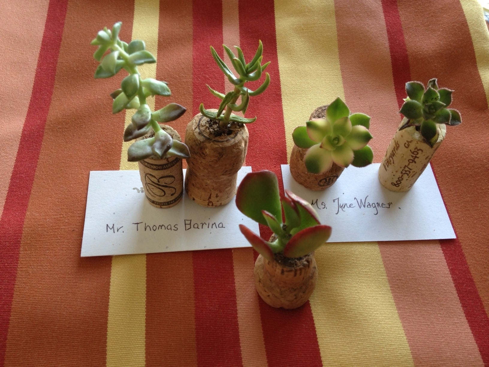 wine and succulents a great wedding favor and table card succulent wedding favors wine and champagne cork succulent favors for wedding tables