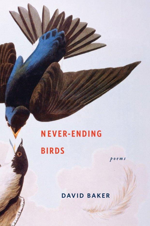 never-ending birds