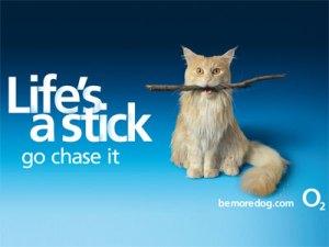 O2-BMD-Stick-Life