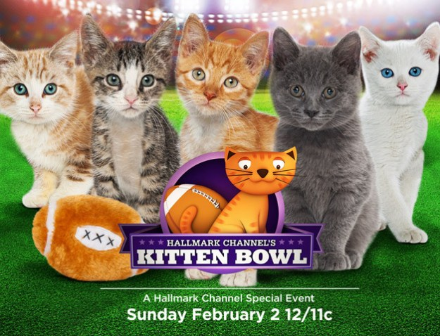The logo for the Kitten Bowl.