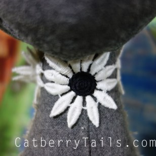 Closeup of gray magnificat's flower collar.