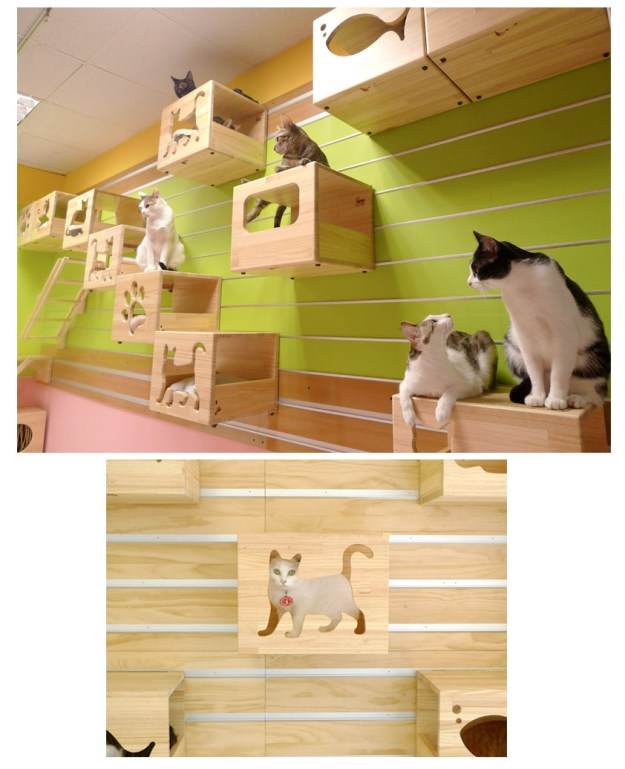 Amazing wall mounted playground for cats. Very modern and cool looking. Catswall Designs.