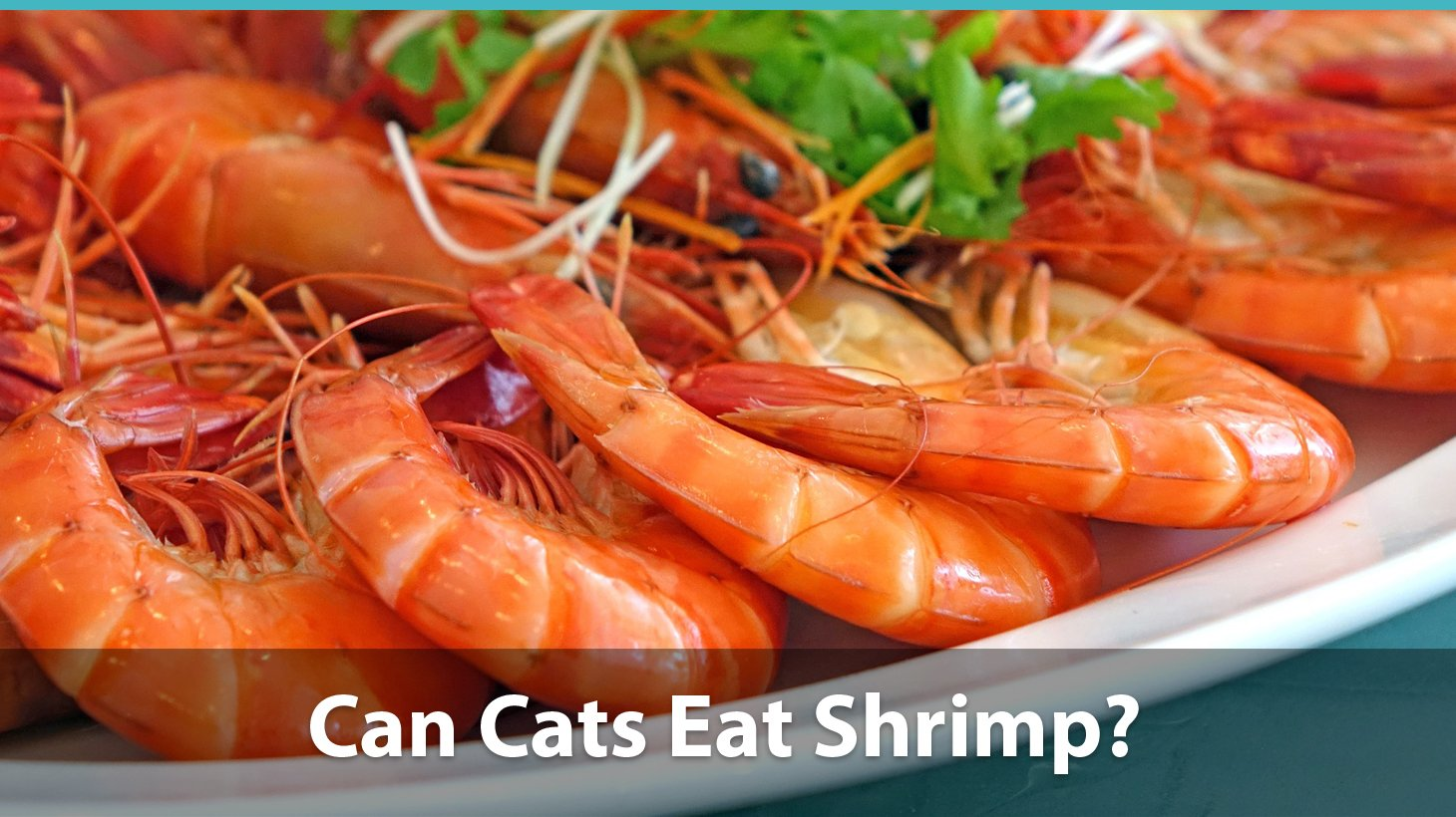 Unusual Shrimp Bubba Can Cats Eat Shrimp Or Are Y Bad Shrimp Sauce Types Types nice food Types Of Shrimp