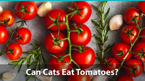 Medium Of Can Dogs Eat Tomato Sauce