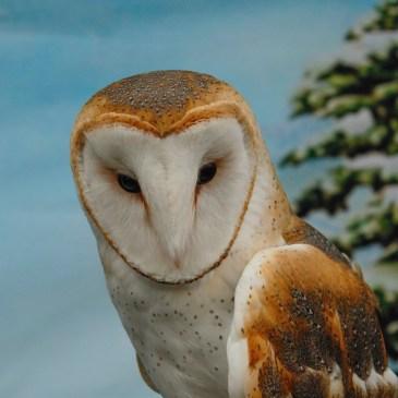 Owl Be Home for Christmas Dec 9