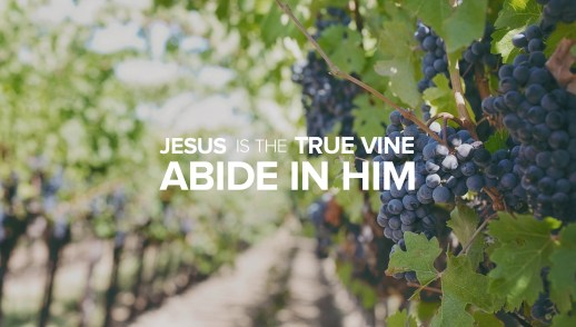 Jesus is the True Vine: Abide in Him and Bear much Fruit