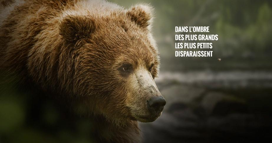 Alerte sur le déclin inquiétant de la biodiversité ordinaire, avec l'association Noé et JCDecaux