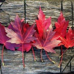 leaves-1727683_1920