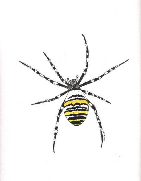 """Araignée Argiope.  Illustration pour la revue """"Universitas"""" (Université de Fribourg, Suisse), septembre 2015"""