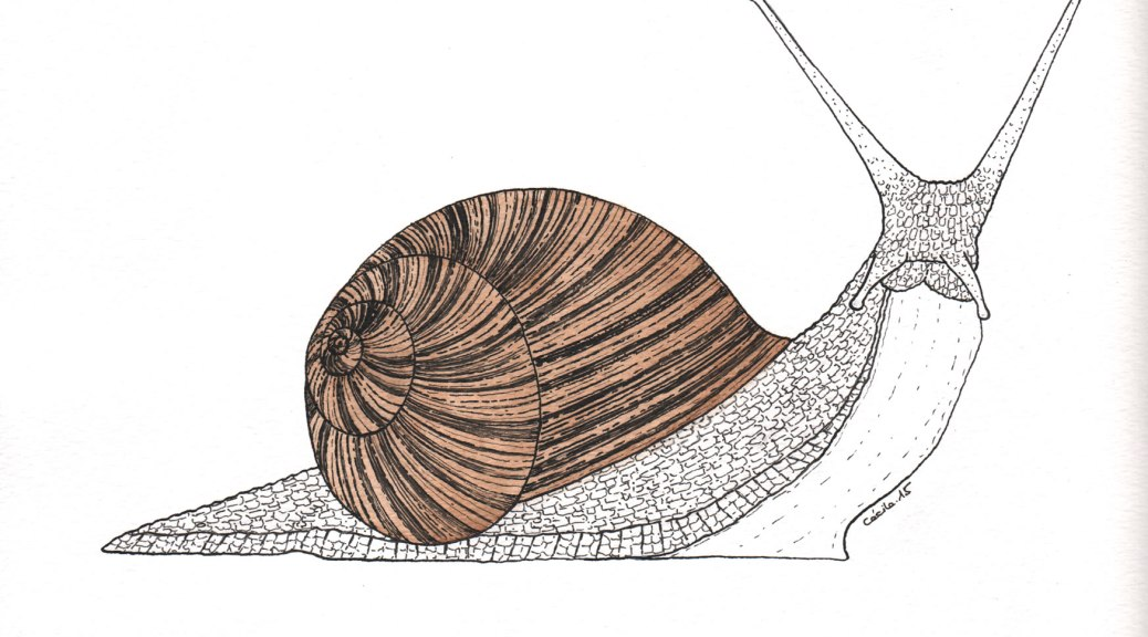 "Escargot.  Illustration pour la revue ""Universitas"" (Université de Fribourg, Suisse), septembre 2015"