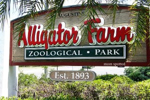 Alligator_farm