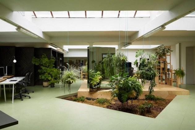 Indoor Plants 08