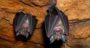 Ilustraciones Cristianas - El murciélago