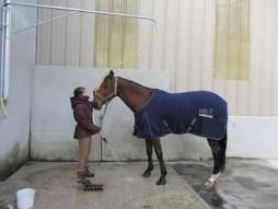 Deux douches pour poneys et chevaux