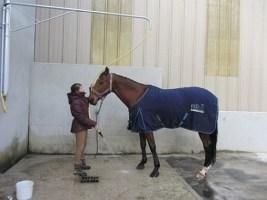 Deux douches pour chevaux et poneys