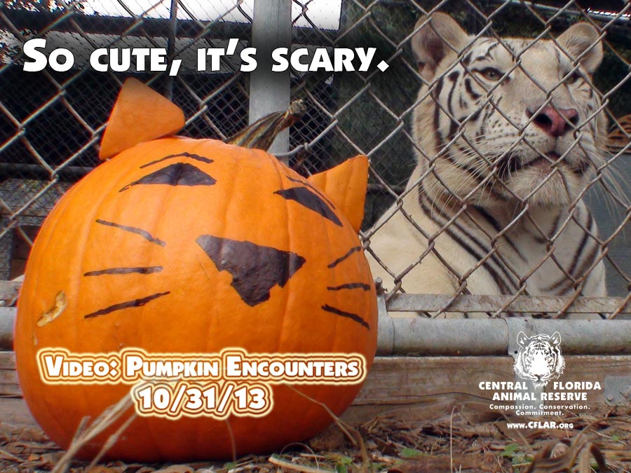 pumpkin promo