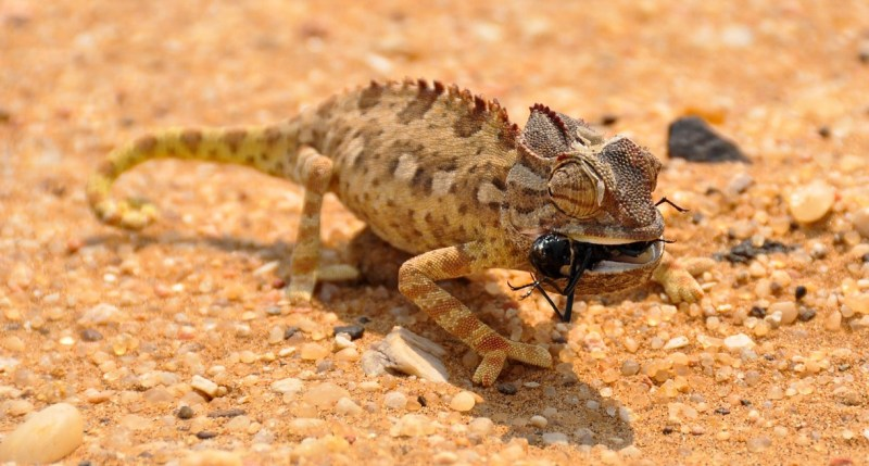 Large Of What Do Crickets Eat