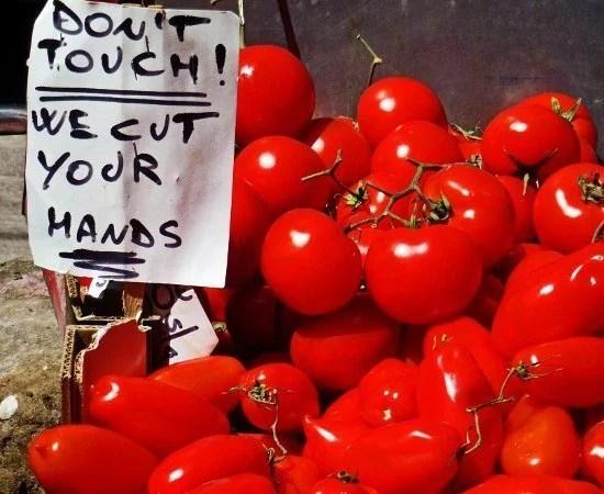Bologna Italy tomatoes