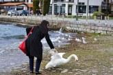 Mujer Mata Cisne Por Querer Tener Su 'Selfie'