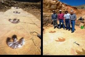 ¿Barney Eres Tú? Hallan Huellas De Dinosaurio En Sonora